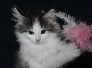 Kitten7Wo1Wo 056