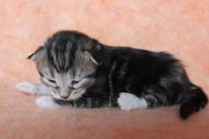 Kitten7Wo1Wo 074