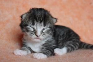 Kitten7Wo1Wo 103