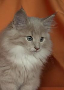 KittenNia13Wochen 053