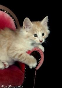 Kitten_Emmi9Wochen 008