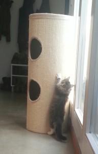 Loki5