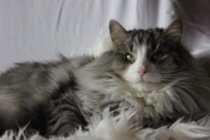 KatzenWeihn2012 144