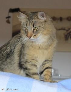 KatzenAug2014 046