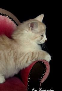 Kitten_Emmi9Wochen 009