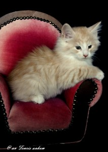 Kitten_Emmi9Wochen 010