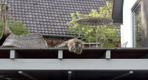 auf der Terrasse hinten (2)