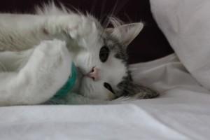 Kitten4Wochen 036