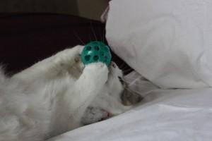 Kitten4Wochen 037
