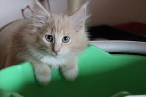 KittenNia13Wochen 003