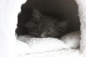 KittenNia13Wochen 008